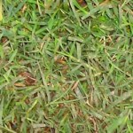berm_grass